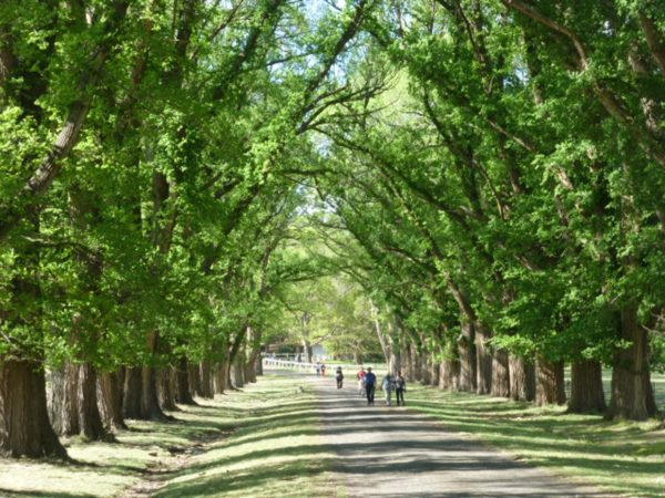 UPDATED: Avenues of Honour and other significant plantings – Australia-wide list